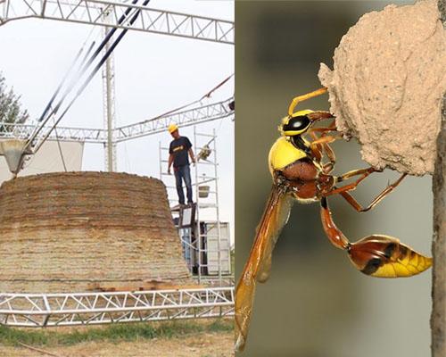 زنبور سفالگر ( معمار ) و پرینت سه بعدی